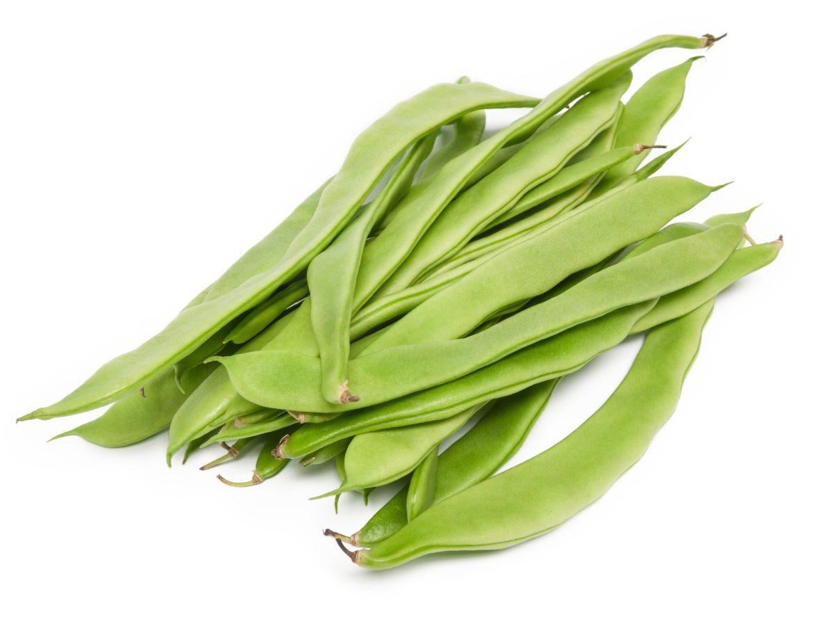 Haricot plat l gumes - Variete de haricot vert ...