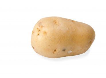 Velout 233 pomme de terre 28 images comment consommer - Semer des pommes de terre ...