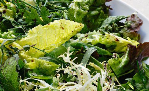 Salade Dherbes Par Alain Ducasse