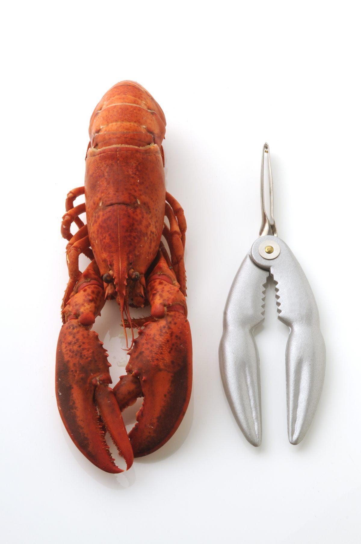 Pince À Crustacés pince à crustacés