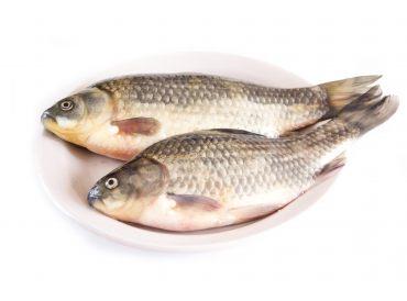 Carpe poissons et fruits de mer for Poisson carpe