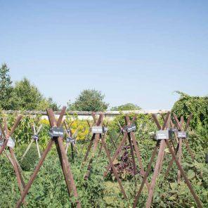 o trouver de bonnes tomates louis albert de broglie prince jardinier nous dit tout. Black Bedroom Furniture Sets. Home Design Ideas