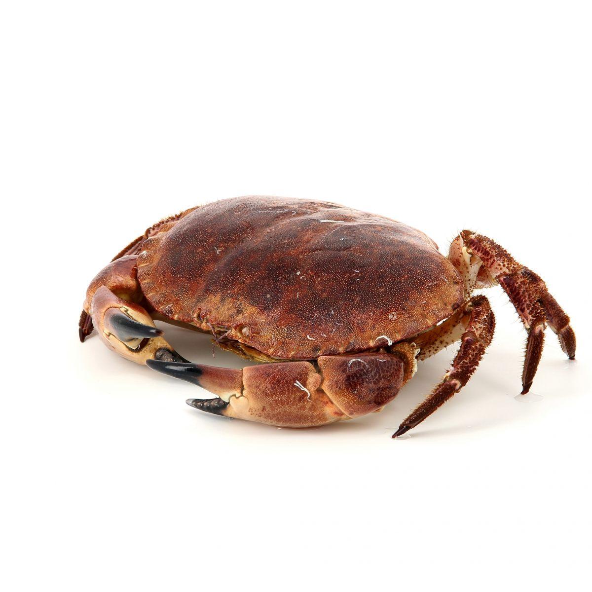 crabe poissons et fruits de mer. Black Bedroom Furniture Sets. Home Design Ideas